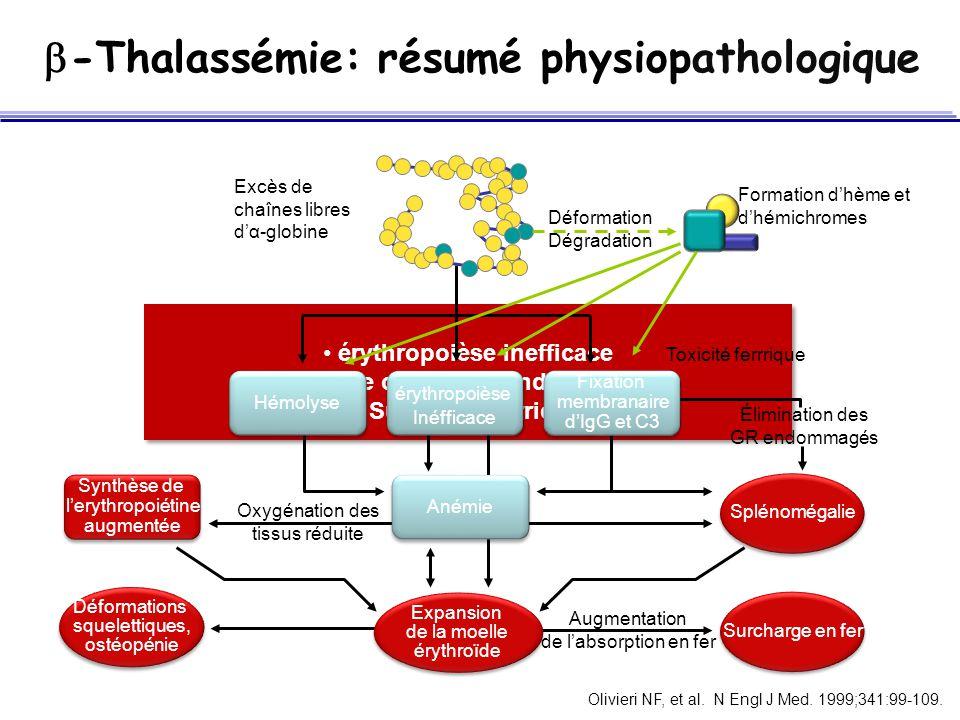 érythropoièse inefficace Anémie chronique and hémolyse Surcharge ferrique érythropoièse inefficace Anémie chronique and hémolyse Surcharge ferrique Hé