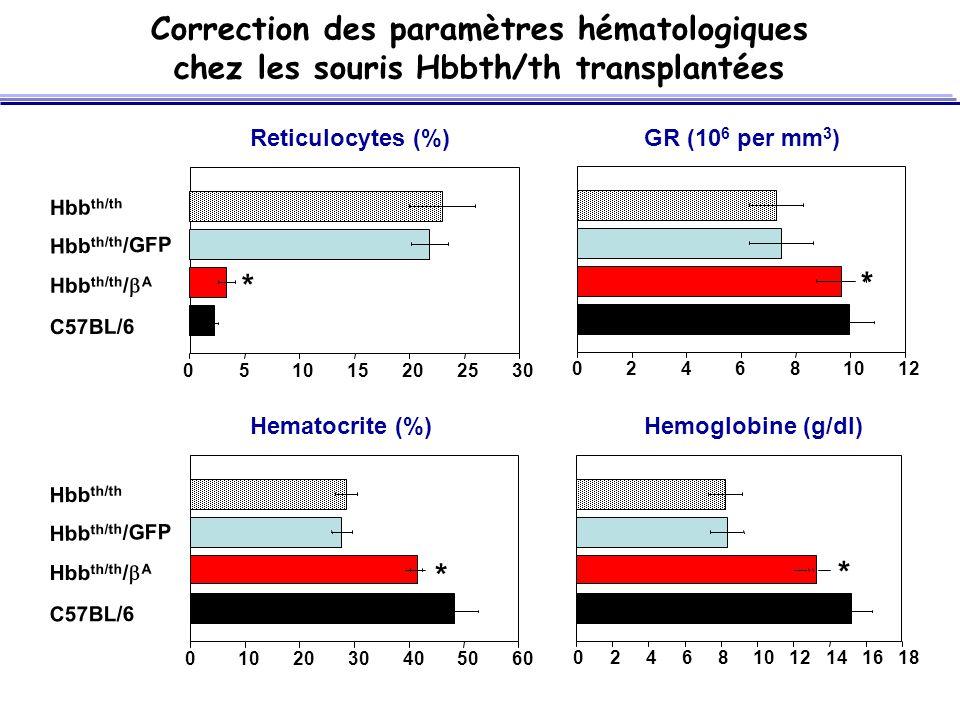 0102030405060 051015202530 Reticulocytes (%) Hemoglobine (g/dl)Hematocrite (%) GR (10 6 per mm 3 ) C57BL/6 Hbb th/th Hbb th/th /GFP Hbb th/th / A C57BL/6 Hbb th/th Hbb th/th /GFP Hbb th/th / A * 024681012 * 024681012141618 * * Correction des paramètres hématologiques chez les souris Hbbth/th transplantées