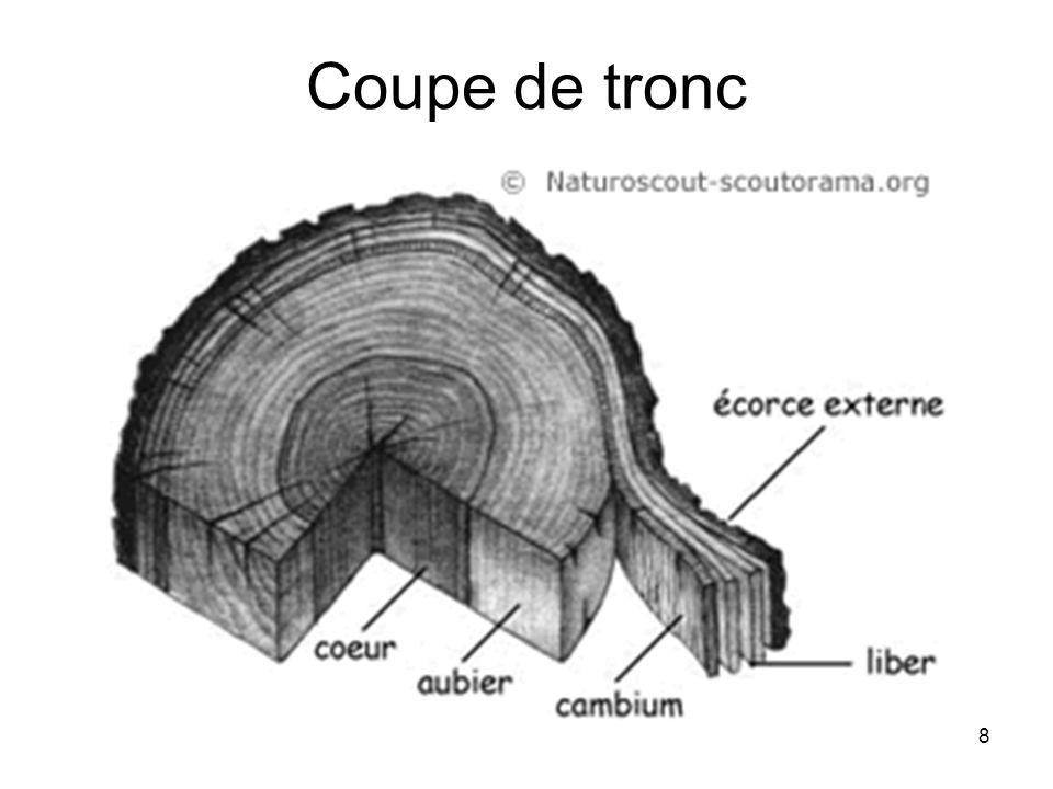 8 Coupe de tronc