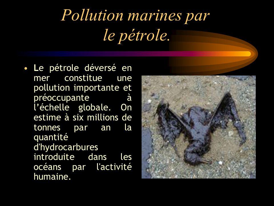 Pollution marines par le pétrole.