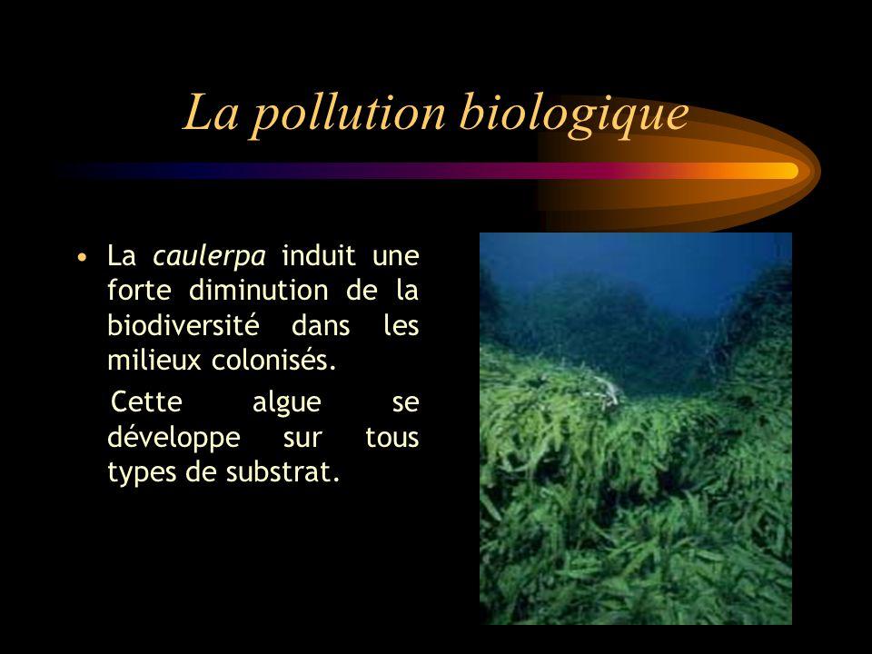 La pollution biologique La caulerpa induit une forte diminution de la biodiversité dans les milieux colonisés.