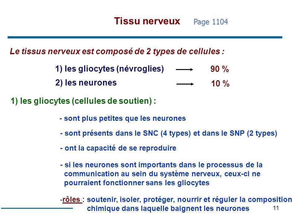 11 Le tissus nerveux est composé de 2 types de cellules : 1) les gliocytes (névroglies) 2) les neurones 90 % 10 % 1) les gliocytes (cellules de soutie