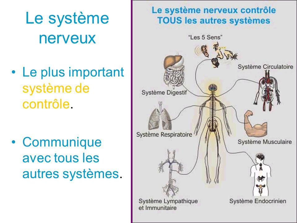 Le système nerveux Le plus important système de contrôle. Communique avec tous les autres systèmes.