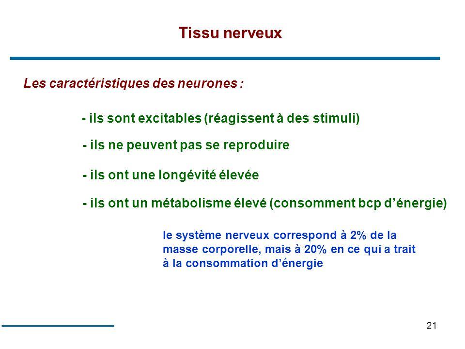 21 Les caractéristiques des neurones : - ils sont excitables (réagissent à des stimuli) - ils ne peuvent pas se reproduire - ils ont une longévité éle
