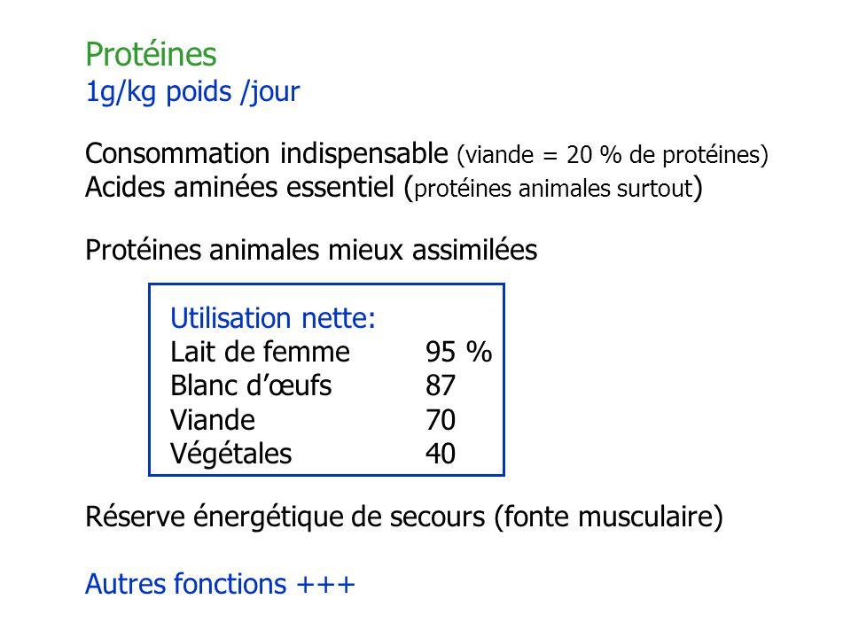 Protéines 1g/kg poids /jour Consommation indispensable (viande = 20 % de protéines) Acides aminées essentiel ( protéines animales surtout ) Protéines