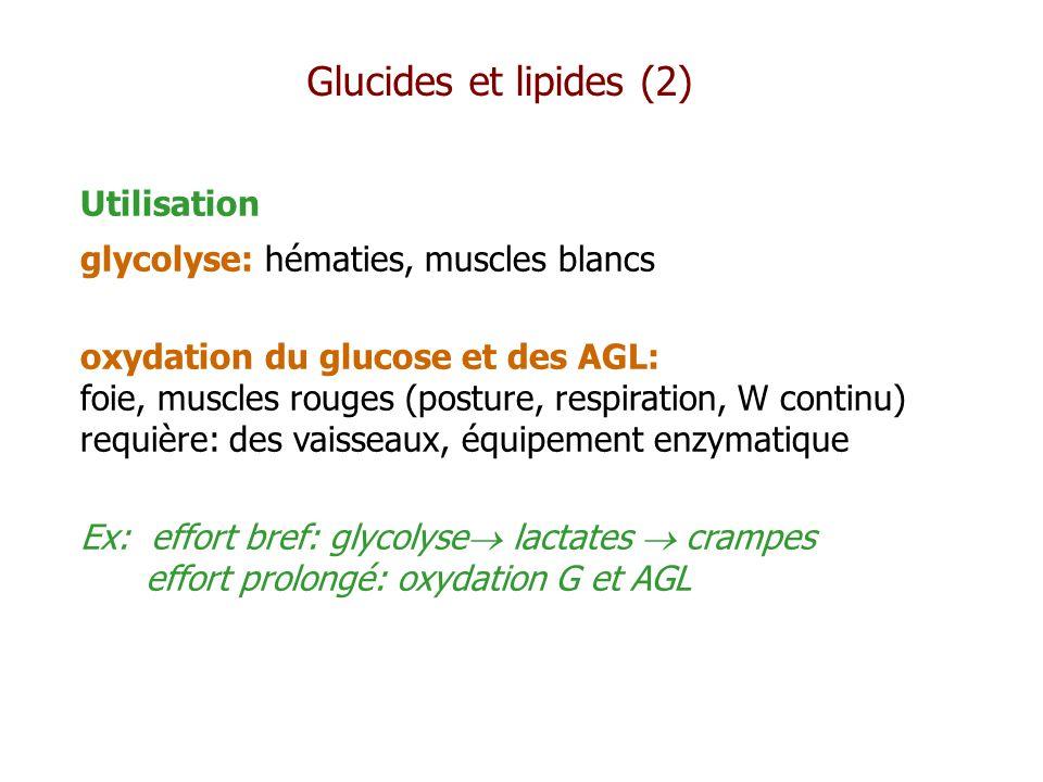 Utilisation glycolyse: hématies, muscles blancs oxydation du glucose et des AGL: foie, muscles rouges (posture, respiration, W continu) requière: des