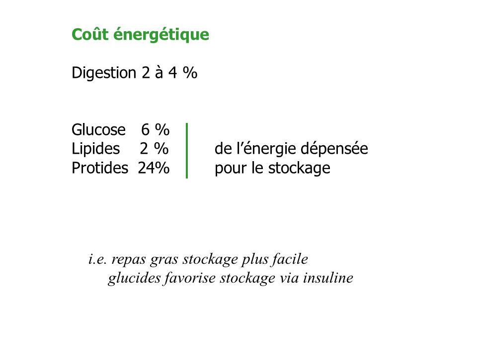 Coût énergétique Digestion 2 à 4 % Glucose 6 % Lipides 2 %de lénergie dépensée Protides 24%pour le stockage i.e. repas gras stockage plus facile gluci