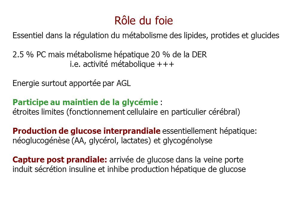 Rôle du foie Essentiel dans la régulation du métabolisme des lipides, protides et glucides 2.5 % PC mais métabolisme hépatique 20 % de la DER i.e. act