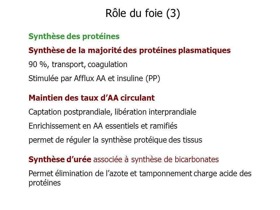 Synthèse des protéines Synthèse de la majorité des protéines plasmatiques 90 %, transport, coagulation Stimulée par Afflux AA et insuline (PP) Maintie