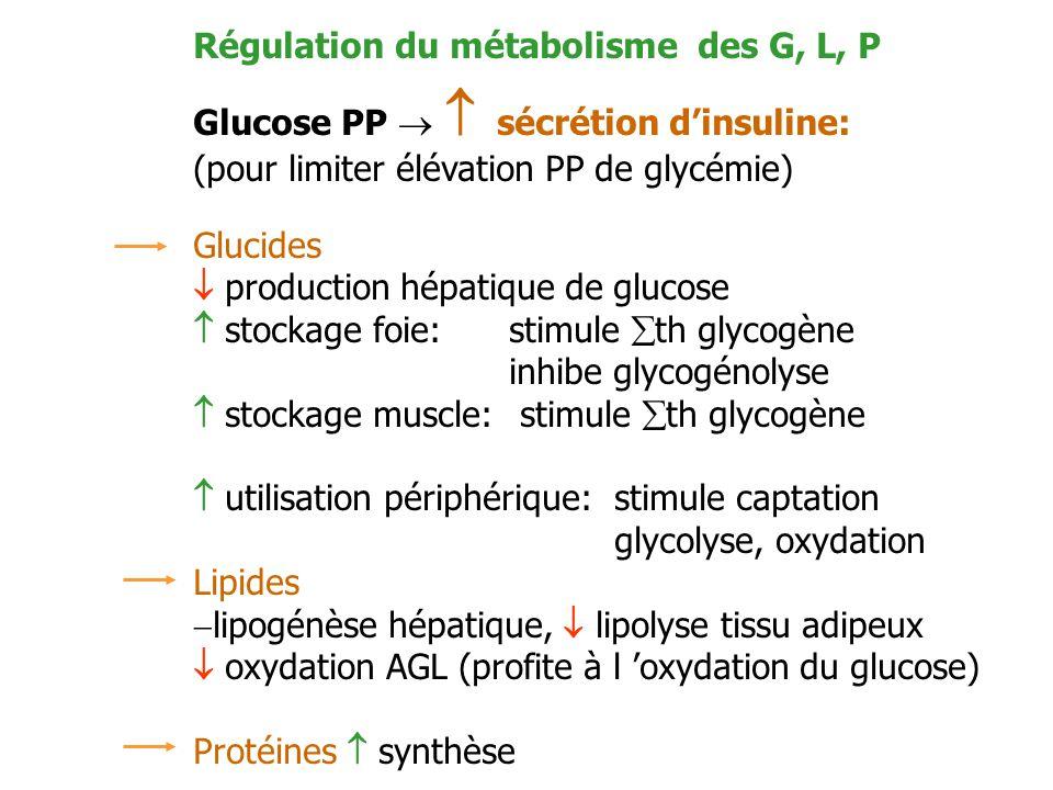 Régulation du métabolisme des G, L, P Glucose PP sécrétion dinsuline: (pour limiter élévation PP de glycémie) Glucides production hépatique de glucose