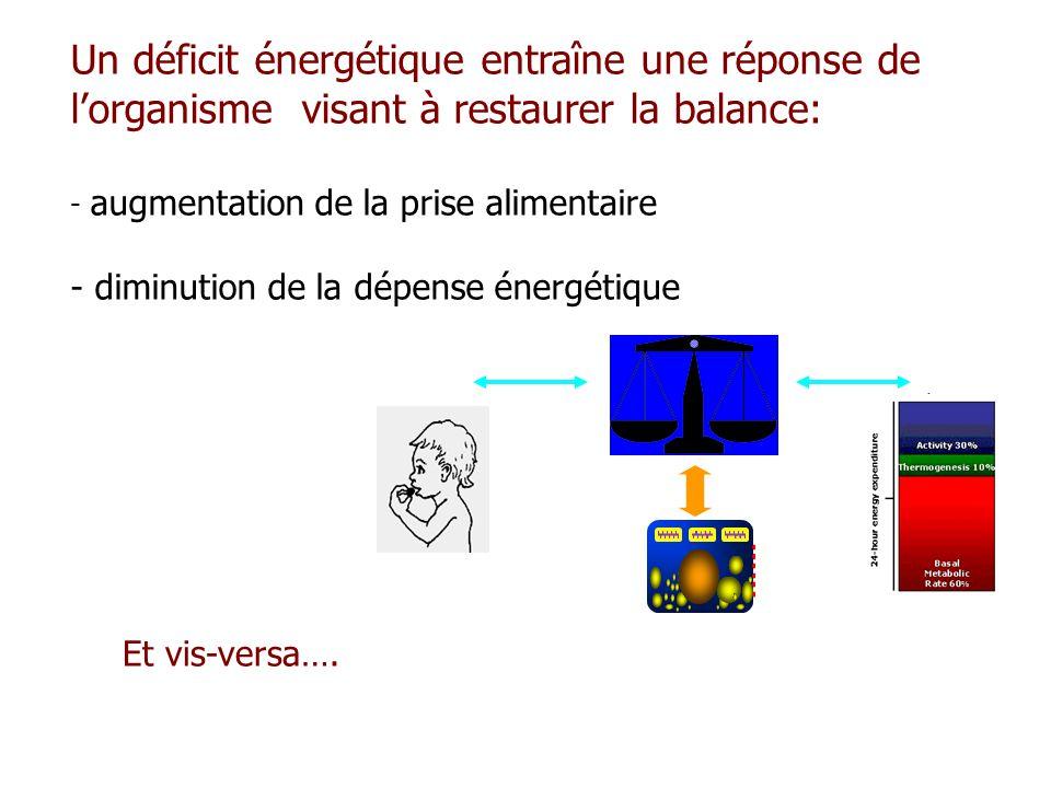 Un déficit énergétique entraîne une réponse de lorganisme visant à restaurer la balance: - augmentation de la prise alimentaire - diminution de la dép