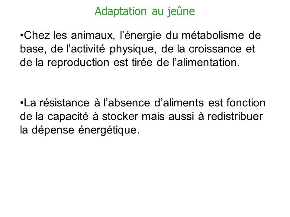Chez les animaux, lénergie du métabolisme de base, de lactivité physique, de la croissance et de la reproduction est tirée de lalimentation. La résist