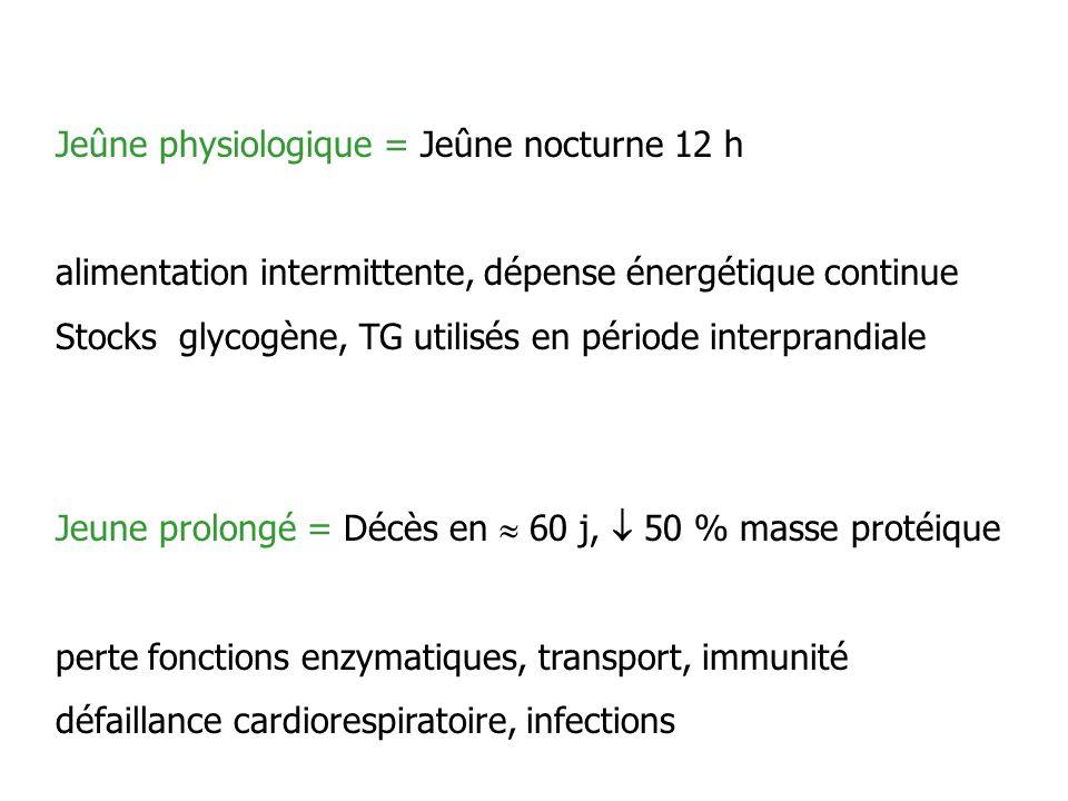 Jeûne physiologique = Jeûne nocturne 12 h alimentation intermittente, dépense énergétique continue Stocks glycogène, TG utilisés en période interprand