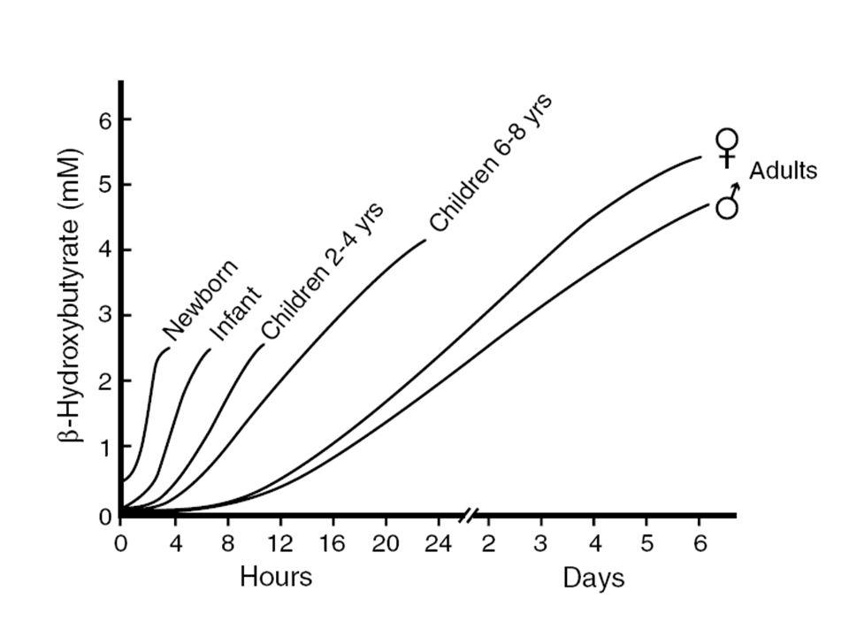 - garder les protéines - garder le glycogène pour les urgences (stress, exercice) - utiliser les réserves lipidiques - maintenir un apport énergétique aux organes Jeûne court = apport de glucose au cerveau = glycogénolyse et néoglucogénèse Jeûne long= utilisation des lipides > protéines = cétogénèse Buts de ladaptation au jeûne