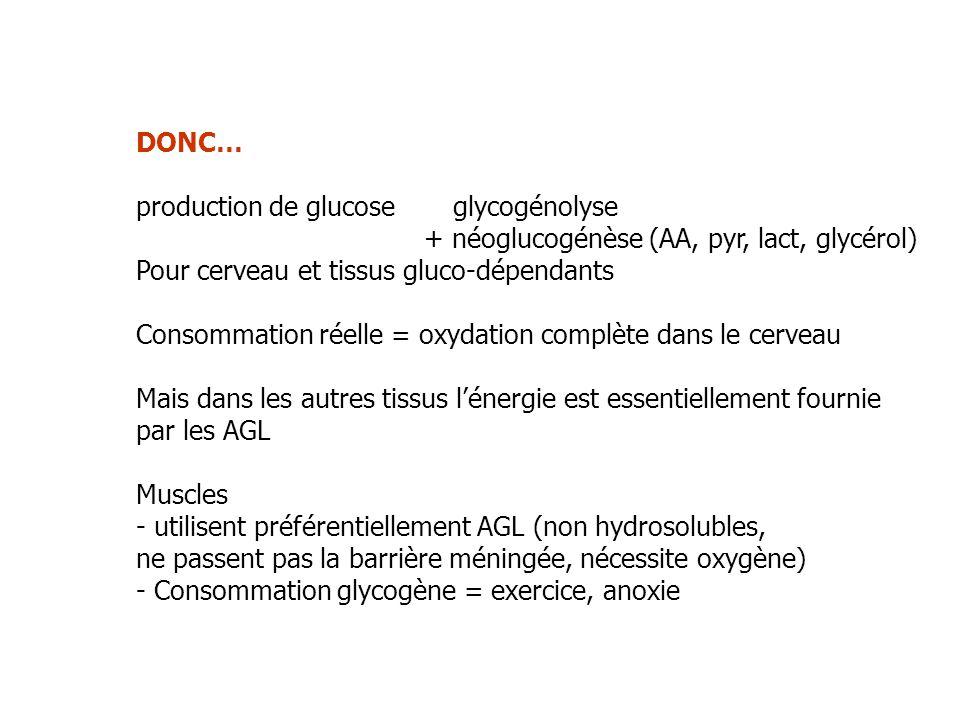 DONC… production de glucose glycogénolyse + néoglucogénèse (AA, pyr, lact, glycérol) Pour cerveau et tissus gluco-dépendants Consommation réelle = oxy