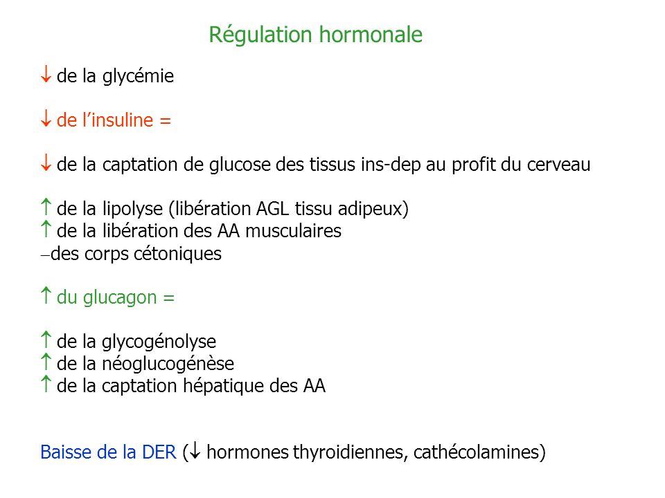Régulation hormonale de la glycémie de linsuline = de la captation de glucose des tissus ins-dep au profit du cerveau de la lipolyse (libération AGL t