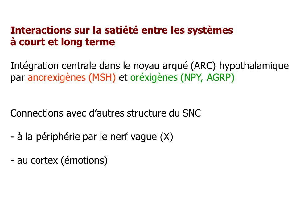 Interactions sur la satiété entre les systèmes à court et long terme Intégration centrale dans le noyau arqué (ARC) hypothalamique par anorexigènes (M