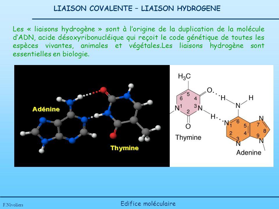 LIAISON COVALENTE – LIAISON HYDROGENE F.Nivoliers Edifice moléculaire Les « liaisons hydrogène » sont à lorigine de la duplication de la molécule dADN