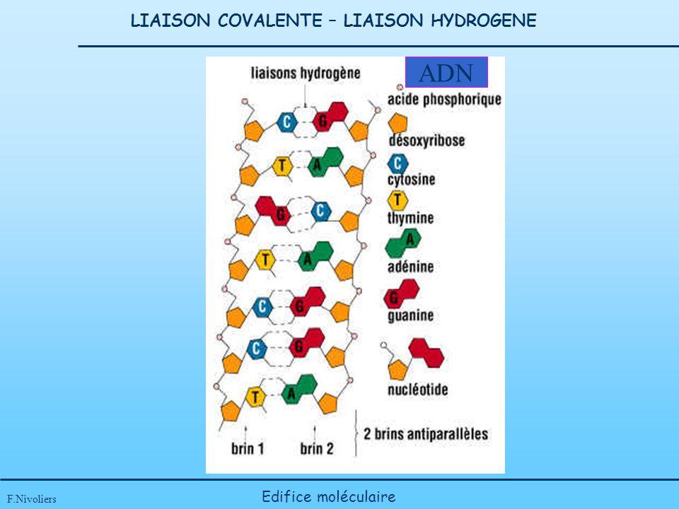LIAISON COVALENTE – LIAISON HYDROGENE F.Nivoliers Edifice moléculaire ADN