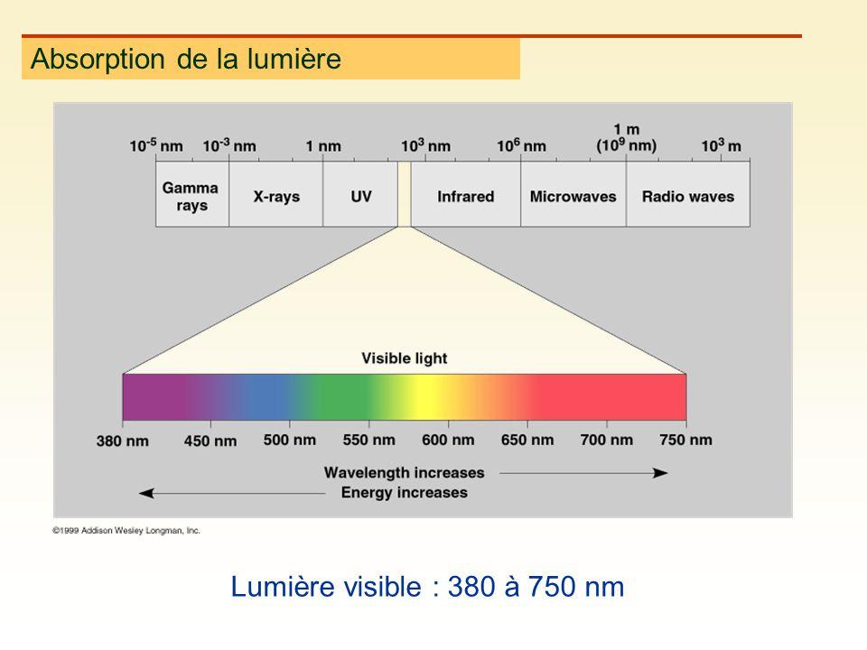 Absorption de la lumière Lumière visible : 380 à 750 nm