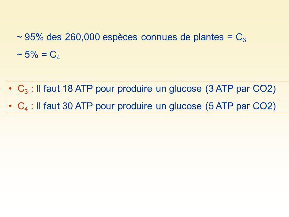 ~ 95% des 260,000 espèces connues de plantes = C 3 ~ 5% = C 4 C 3 : Il faut 18 ATP pour produire un glucose (3 ATP par CO2) C 4 : Il faut 30 ATP pour