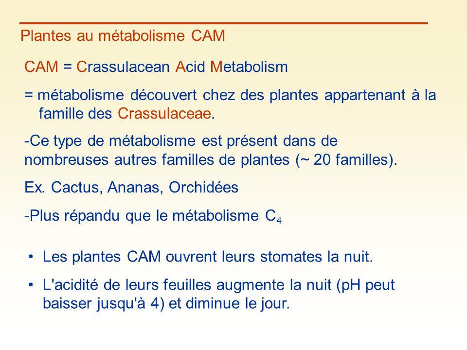 Plantes au métabolisme CAM CAM = Crassulacean Acid Metabolism = métabolisme découvert chez des plantes appartenant à la famille des Crassulaceae. Les