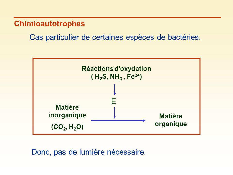 Chimioautotrophes Cas particulier de certaines espèces de bactéries. Matière inorganique (CO 2, H 2 O) Matière organique Réactions d'oxydation ( H 2 S