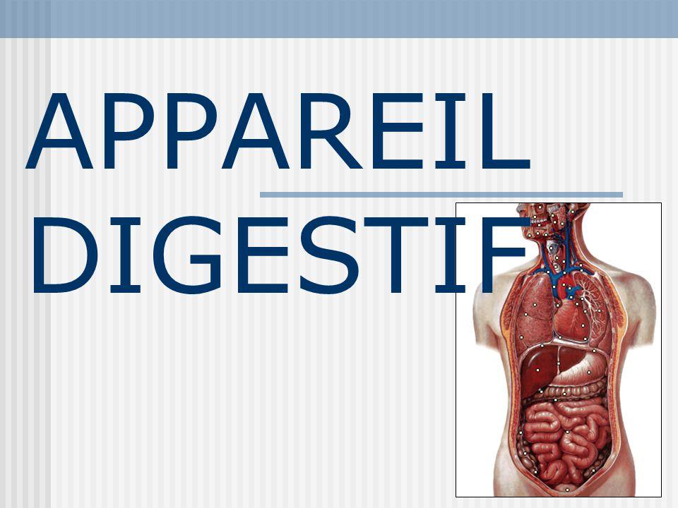 29/05/2014 10:0932 Gros intestin Cest un long tube (1,5 m) qui fait suite à l intestin grêle et se termine par l anus.