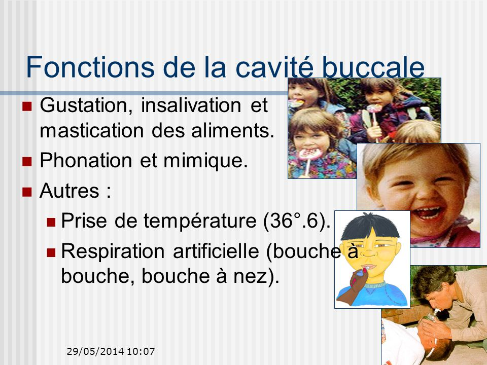 10 Gustation, insalivation et mastication des aliments.