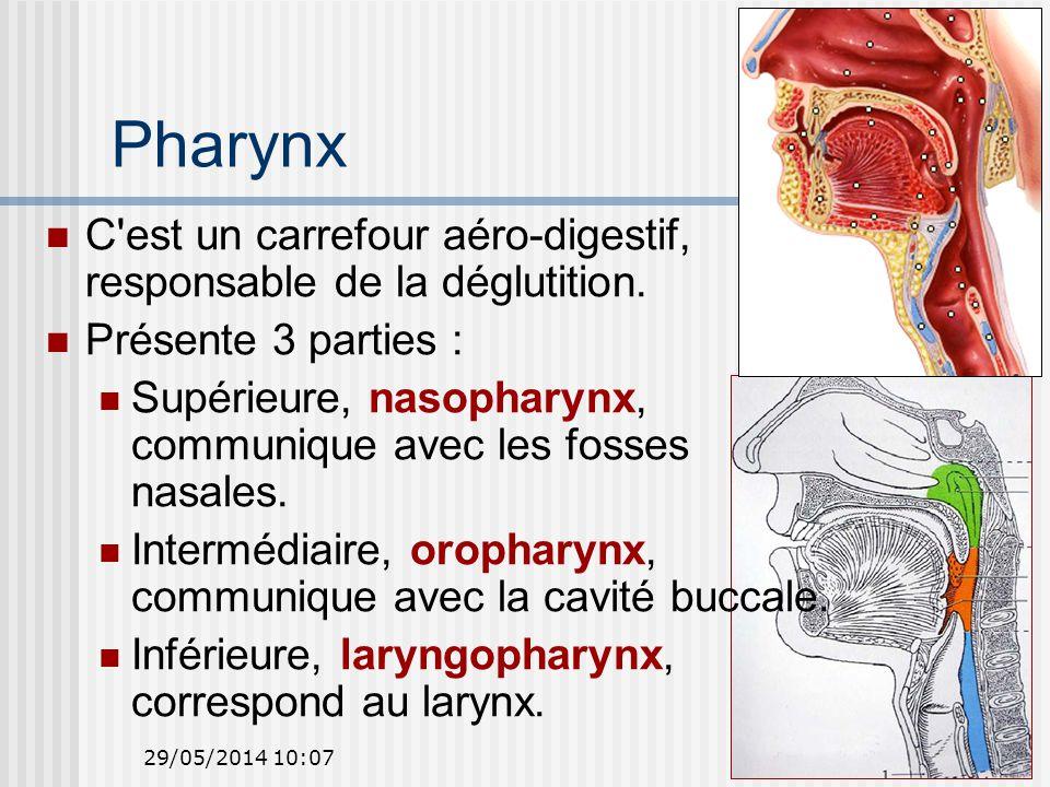 29/05/2014 10:0913 Pharynx C est un carrefour aéro-digestif, responsable de la déglutition.