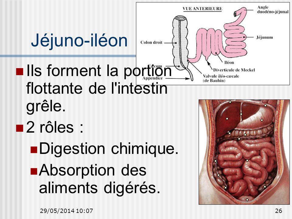 29/05/2014 10:0926 Jéjuno-iléon Ils forment la portion flottante de l intestin grêle.