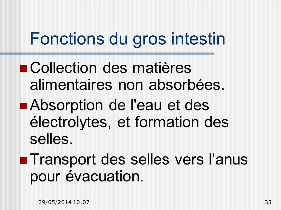 29/05/2014 10:0933 Fonctions du gros intestin Collection des matières alimentaires non absorbées.