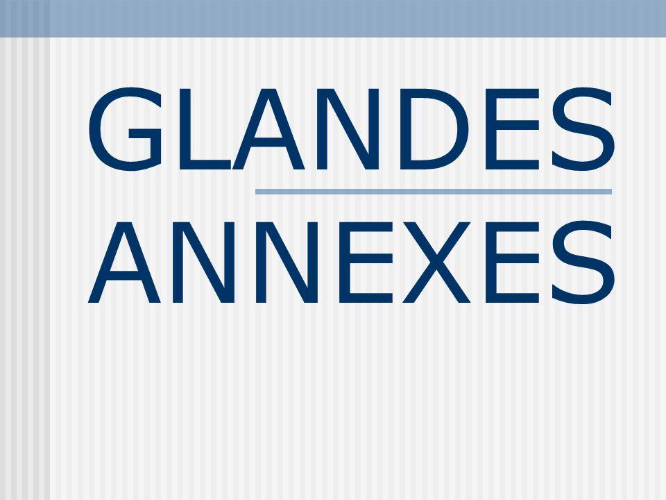 GLANDES ANNEXES