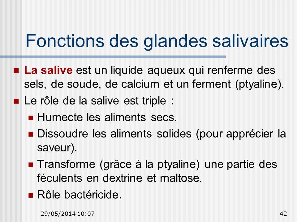 29/05/2014 10:0942 Fonctions des glandes salivaires La salive est un liquide aqueux qui renferme des sels, de soude, de calcium et un ferment (ptyaline).