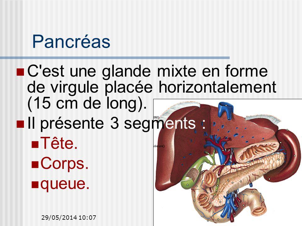 29/05/2014 10:0949 Pancréas C est une glande mixte en forme de virgule placée horizontalement (15 cm de long).
