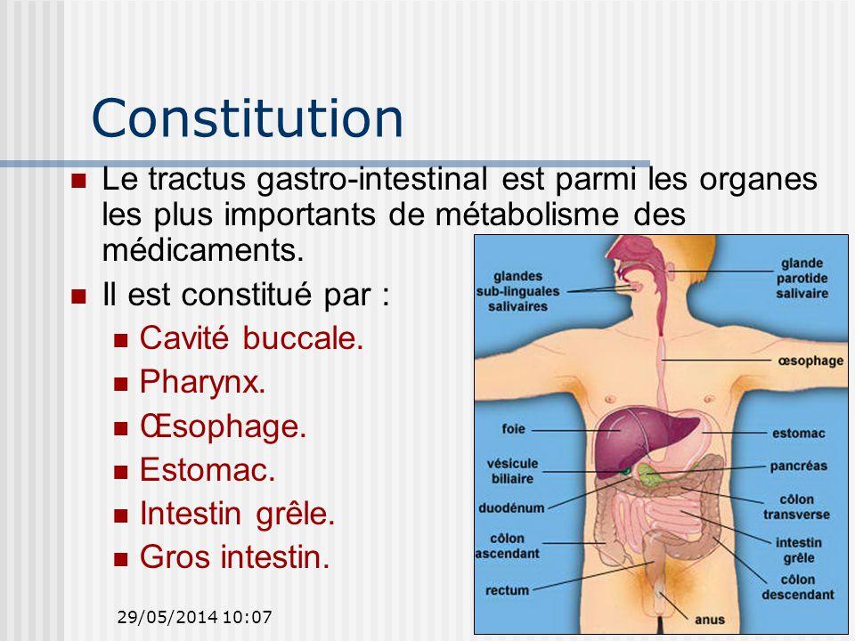 29/05/2014 10:096 Constitution Le tractus gastro-intestinal est parmi les organes les plus importants de métabolisme des médicaments.
