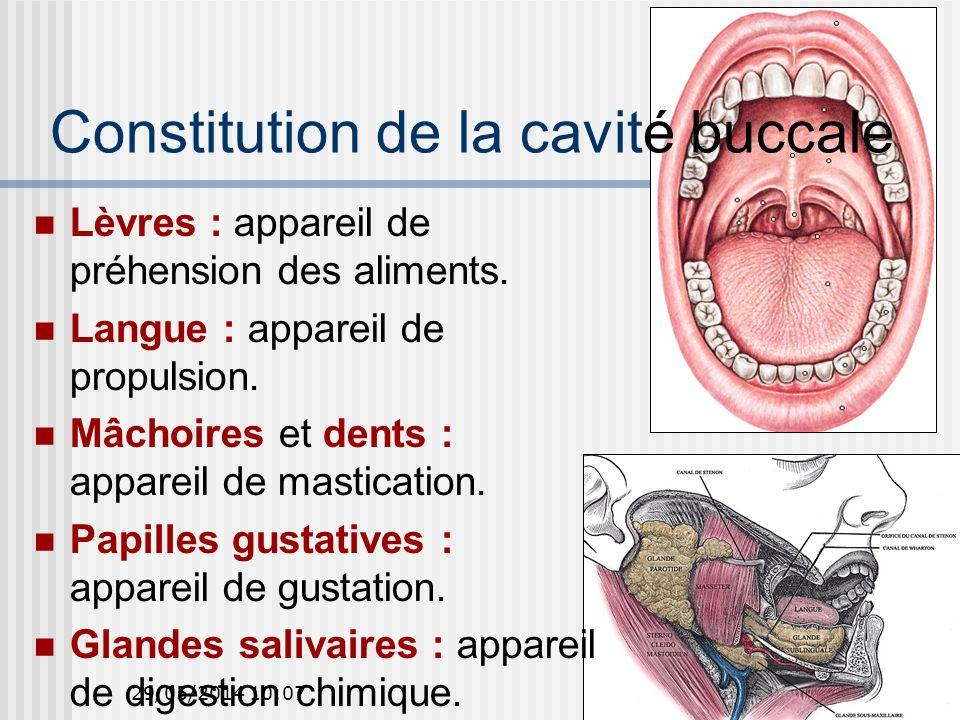 29/05/2014 10:0939 Glandes salivaires (1) 3 glandes paires et principales qui sécrètent la salive dans la cavité buccale : Parotide.