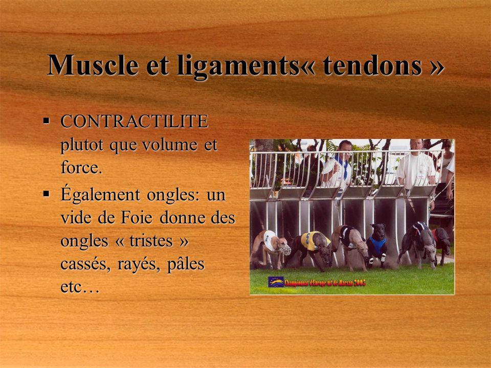 Muscle et ligaments« tendons » CONTRACTILITE plutot que volume et force. Également ongles: un vide de Foie donne des ongles « tristes » cassés, rayés,