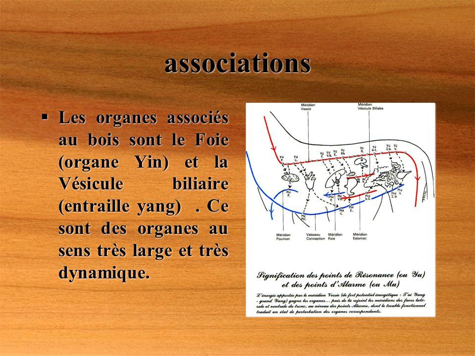 associations Les organes associés au bois sont le Foie (organe Yin) et la Vésicule biliaire (entraille yang). Ce sont des organes au sens très large e
