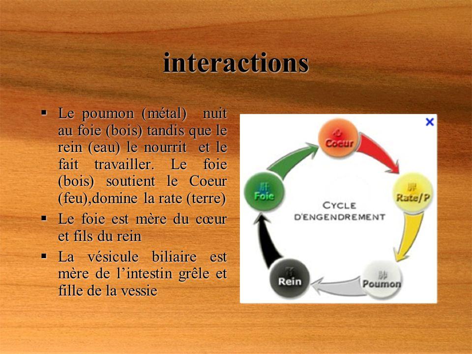 interactions Le poumon (métal) nuit au foie (bois) tandis que le rein (eau) le nourrit et le fait travailler. Le foie (bois) soutient le Coeur (feu),d