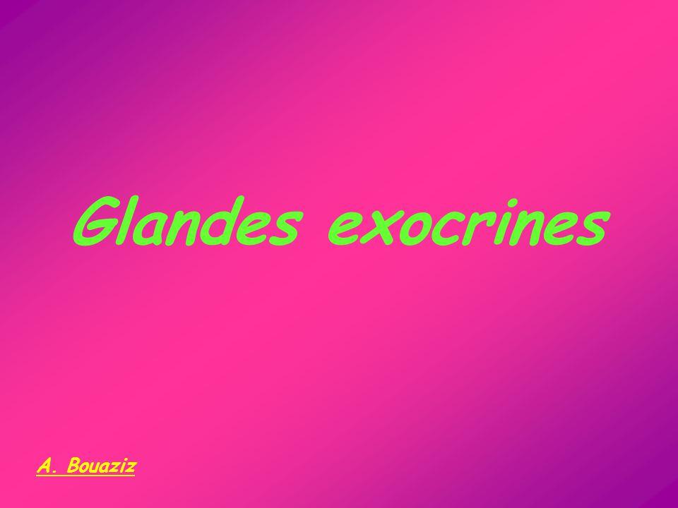 Glandes = épithéliums sécrétoires Glandes G.exocrines G.