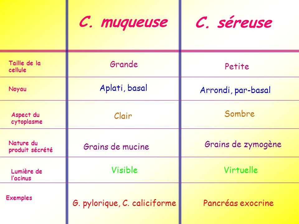 C.muqueuse C.
