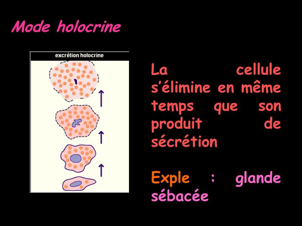 Mode holocrine La cellule sélimine en même temps que son produit de sécrétion Exple : glande sébacée