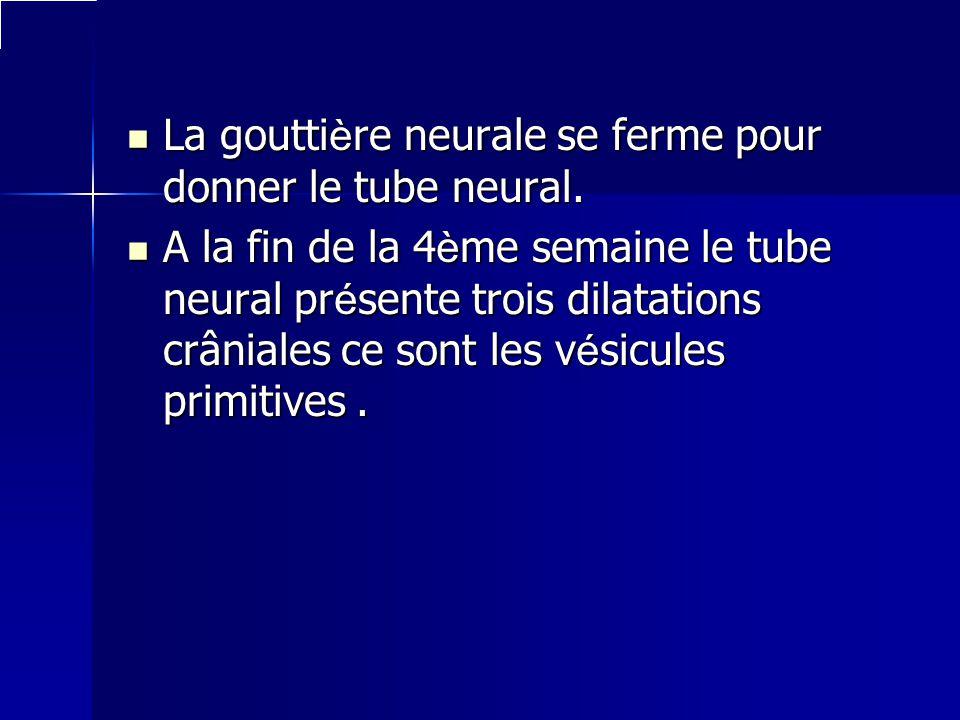 La gouttière neurale se ferme pour donner le tube neural. A la fin de la 4ème semaine le tube neural présente trois dilatations crâniales ce sont les