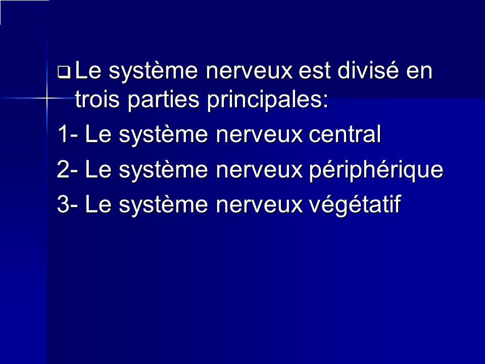 Le système nerveux est divisé en trois parties principales: 1- Le système nerveux central 2- Le système nerveux périphérique 3- Le système nerveux vég
