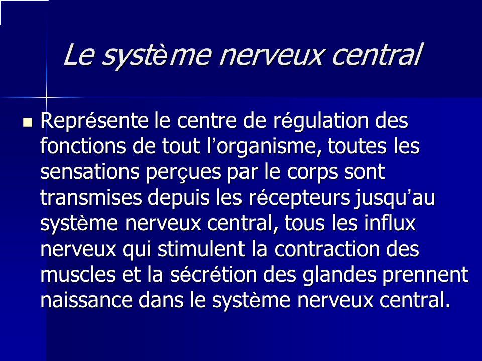 Le syst è me nerveux central Le syst è me nerveux central Repr é sente le centre de r é gulation des fonctions de tout l organisme, toutes les sensati