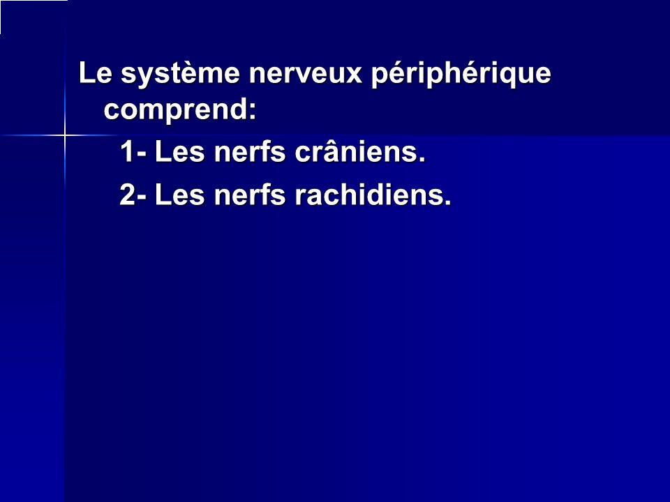 Le système nerveux périphérique comprend: 1- Les nerfs crâniens. 1- Les nerfs crâniens. 2- Les nerfs rachidiens. 2- Les nerfs rachidiens.