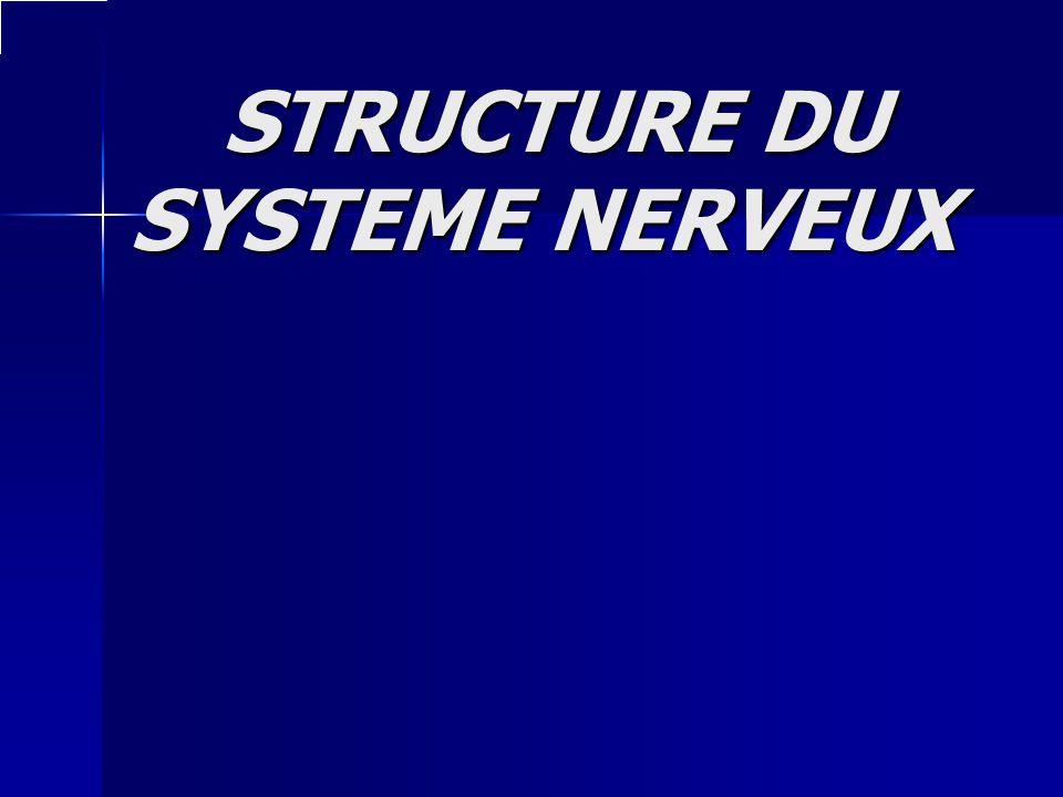 STRUCTURE DU SYSTEME NERVEUX STRUCTURE DU SYSTEME NERVEUX