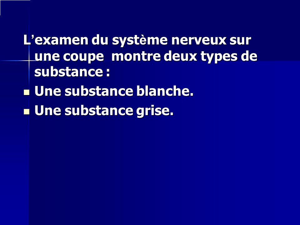 Lexamen du système nerveux sur une coupe montre deux types de substance : Une substance blanche. Une substance grise.