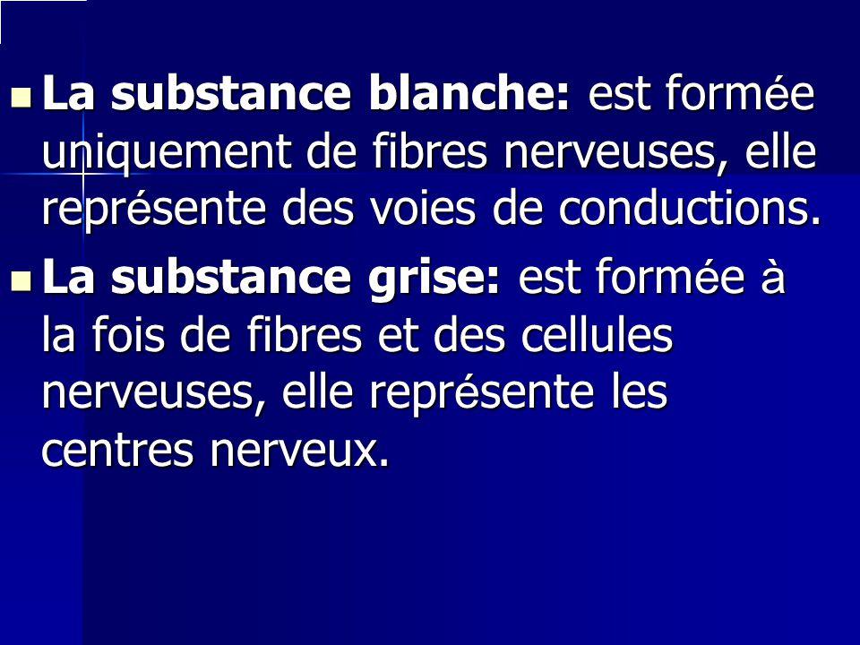 La substance blanche: est formée uniquement de fibres nerveuses, elle représente des voies de conductions. La substance grise: est formée à la fois de